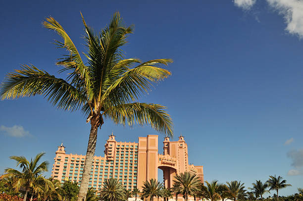 Palm tree in front of Atlantis on Paradise Island in Bahamas stock photo
