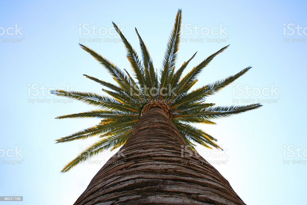 Palm tree in Hollywood, CA stock photo