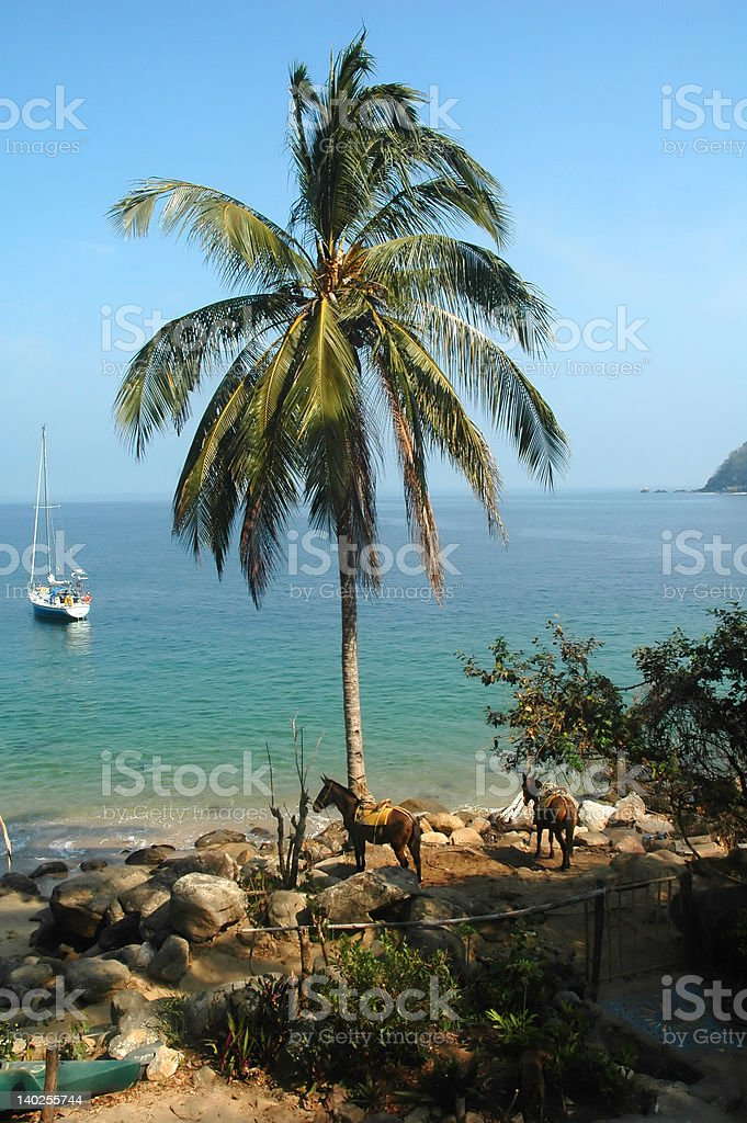 Palm Tree in Mexican Port stock photo