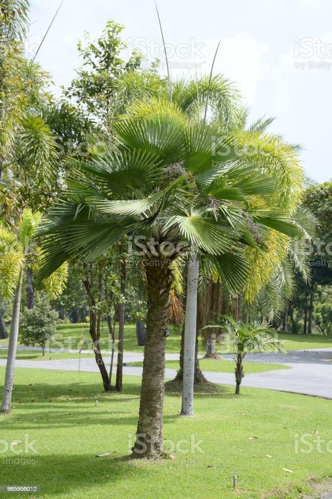 palmboom in natuur tuin - Royalty-free Blad Stockfoto