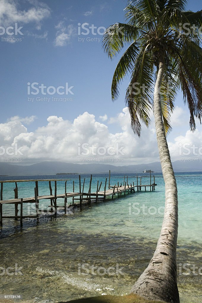 Palm Tree in San Blas Islands, Panama stock photo