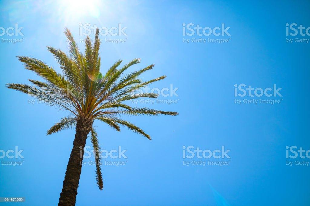 Palmboom in de zonnige blauwe hemel - Royalty-free Blauw Stockfoto