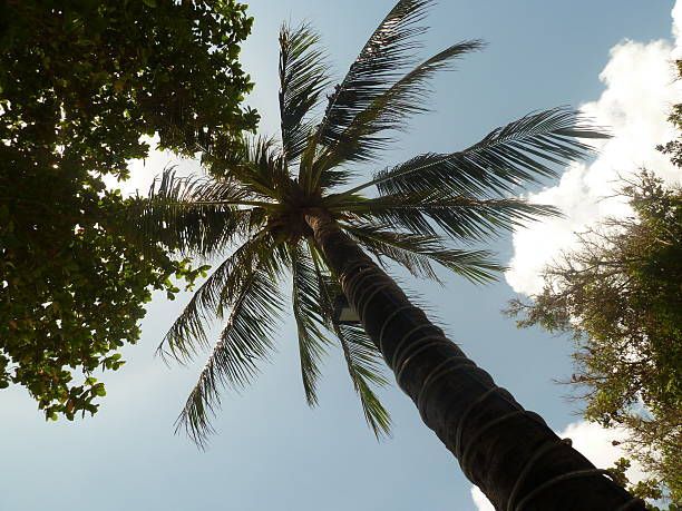 Palm Tree in the Sky stock photo
