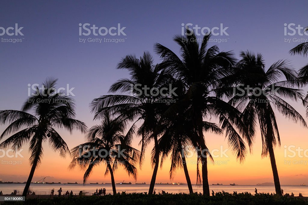 palm tree in the sunset stock photo