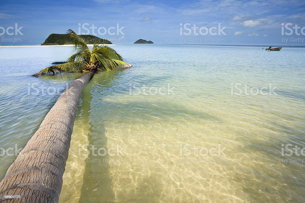 Palm tree in the water. royalty-free stock photo