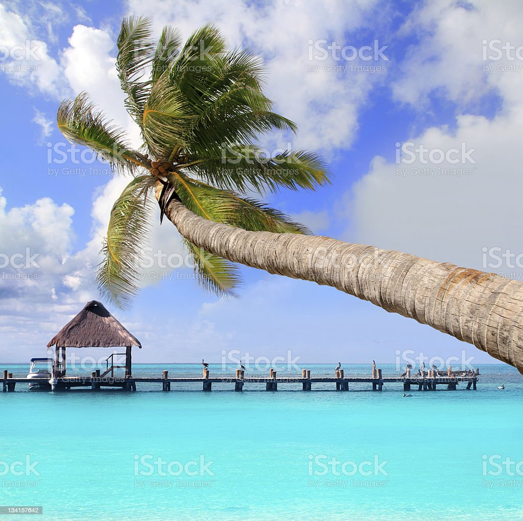 Palm tree in tropical perfect beach stock photo