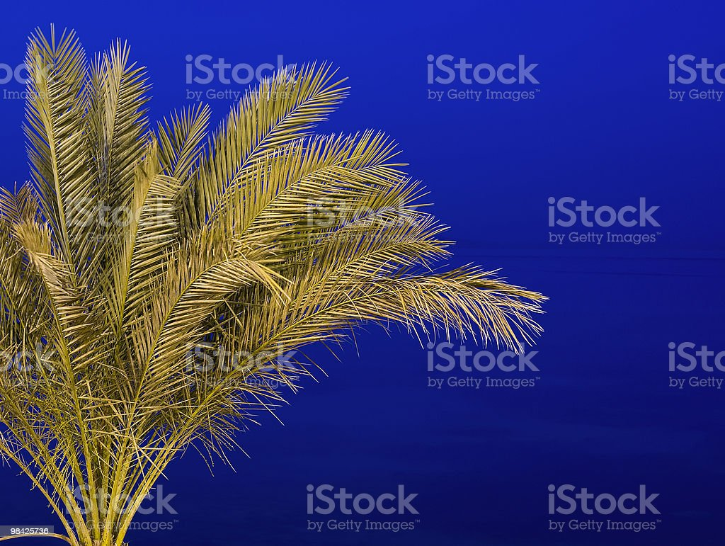Palm tree isolated against a night sky royalty-free stock photo