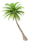 """High Resolution Palm Tree Render, 3D Image;"""