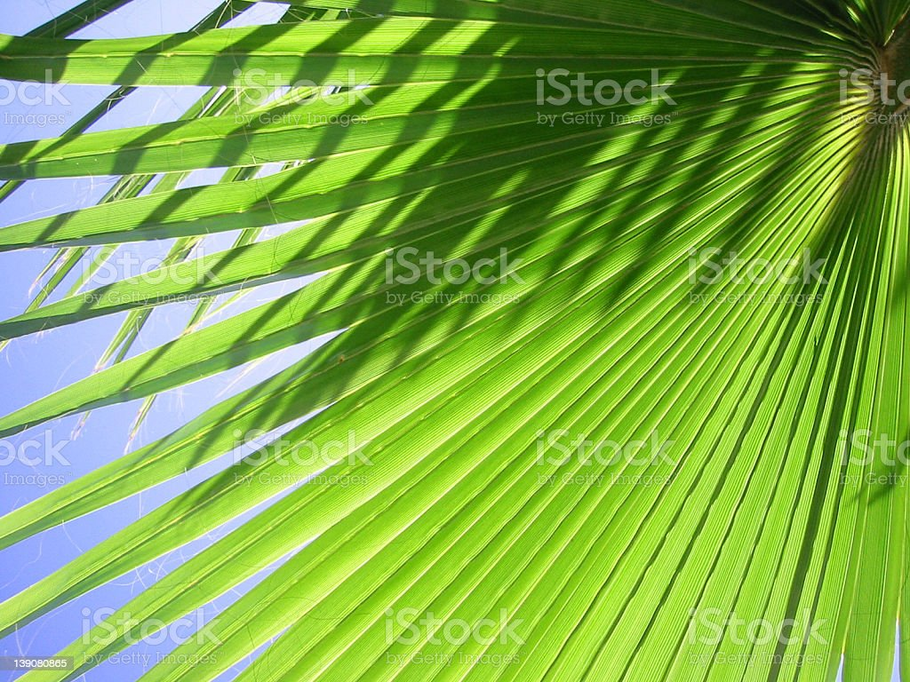 Palm Tree Leaf 2 royalty-free stock photo