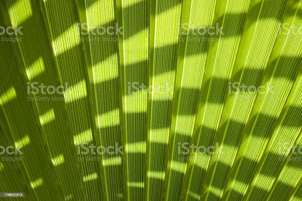 Palm tree leaf royalty-free stock photo