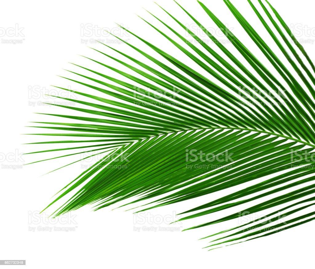 Palme Blätter – Foto