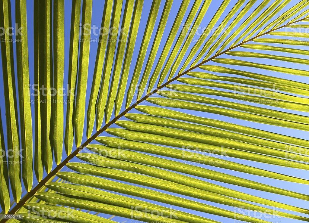 Palm tree leaf royalty-free stock photo