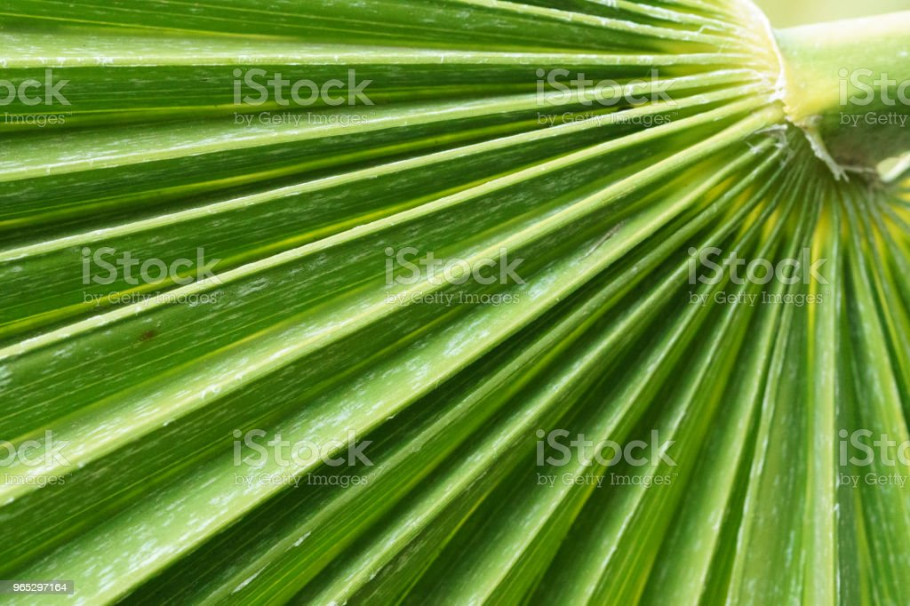 Palm tree leaf zbiór zdjęć royalty-free
