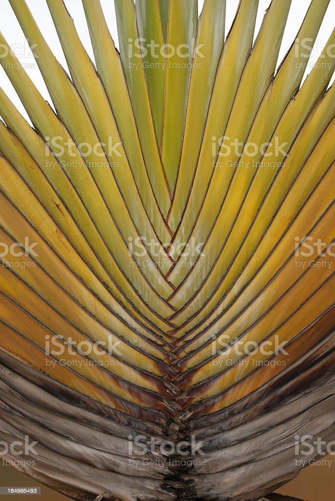 Palm Tree Leaf Portrait royalty-free stock photo