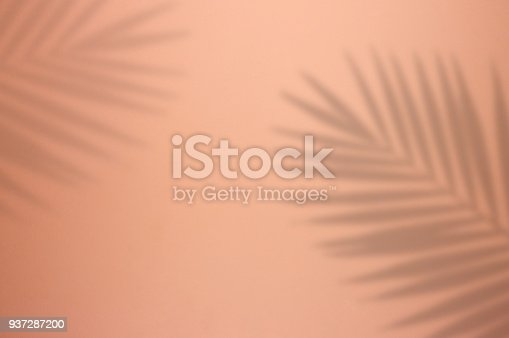 Palm Tree Leaf Shadow on Pink Background