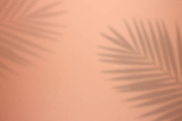 Palm Tree Leaf Shadow on Pink Background stock photo