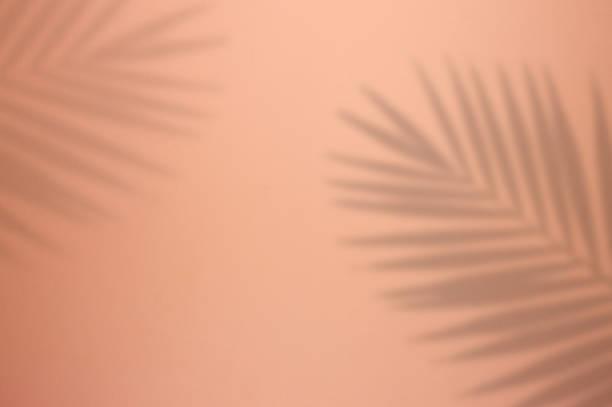 palm tree leaf shadow on pink background - тень стоковые фото и изображения