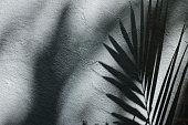 Palm Tree Leaf Shadow on Wall Background