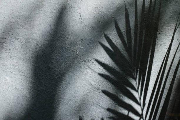Palm Tree Leaf Shadow on Wall Background stock photo