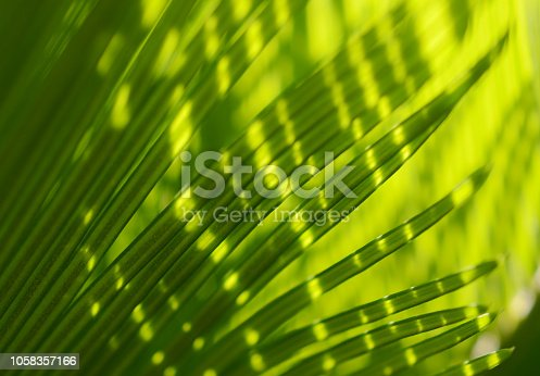 Palm Tree Leaf Sunlight Tropical Leaves Light and Shadow Abstract Porcupine Green Yellow Natural Pattern Macro Photography Close-up