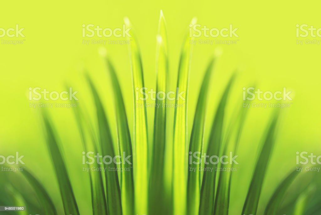Palm Tree Leaf Sunlight Tropical Tiara Abstract Tropic Summer Green Background stock photo