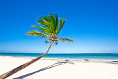 Palm tree is leaning at an angle on a tropical beach due to the winds.  RM