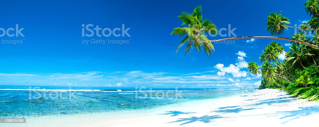 A palm tree leaning toward the ocean and tropical beach royalty-free stock photo