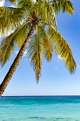 palm tree leaves and turquoise indian ocean on mauritius island in africa.