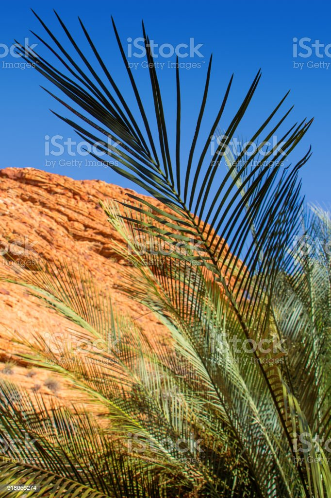 Palm tree leaves in Kings Canyon Northern Territory Australia stock photo