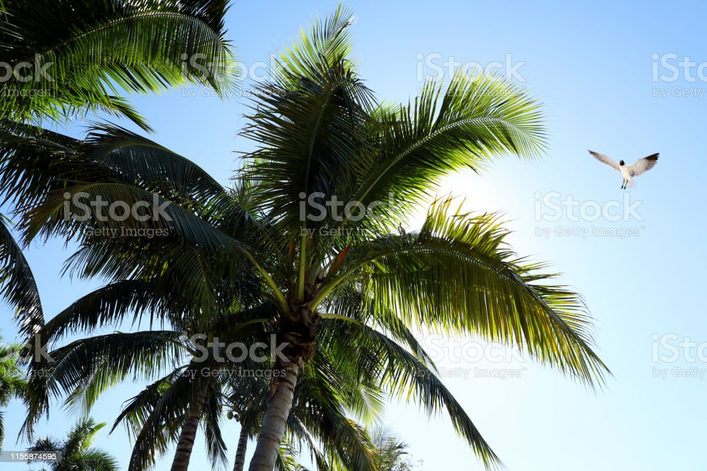 Close up tall palm tree leaves over clear blue sky with flying...