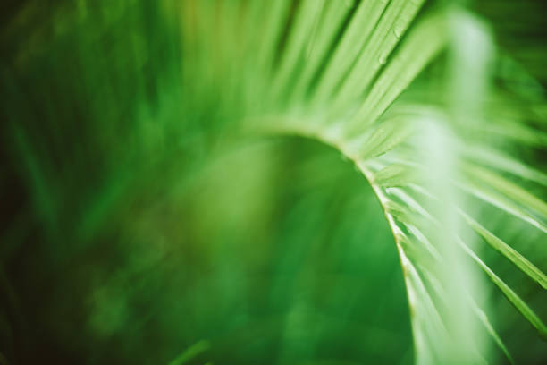 Palm tree leaves. Tropical trees background stock photo