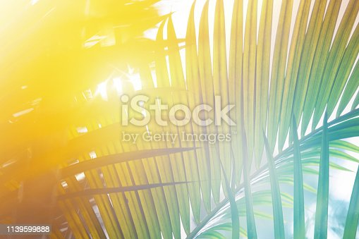 Close-up of Palm tree leaves under sunlight.
