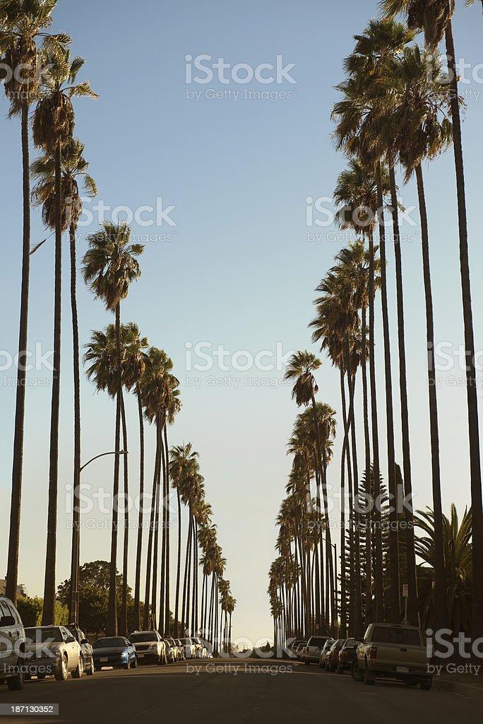 Palm tree lined street royalty-free stock photo