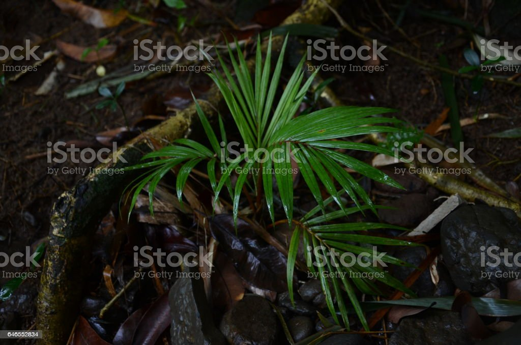 Palm Tree Little Green Earth Soil Tropical Fresh