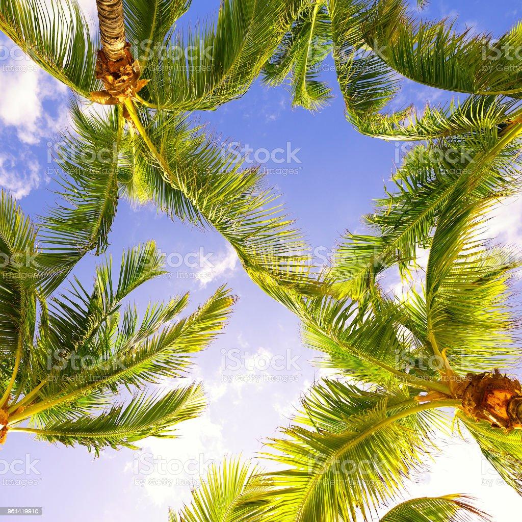 Palmeira Vista de Ângulo Baixo - Foto de stock de Abaixo royalty-free