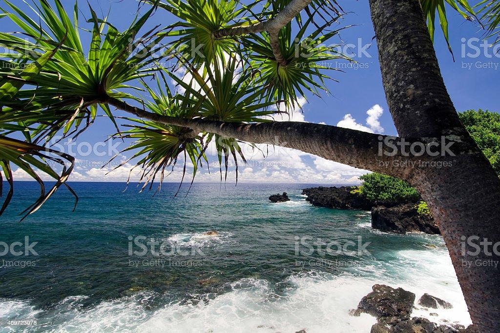 Palm tree, northern coastline,road to Hana, Maui, Hawaii stock photo