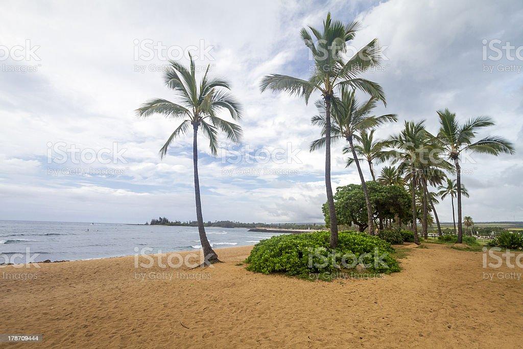 Palm tree, Oahu North Shore, Hawaii royalty-free stock photo
