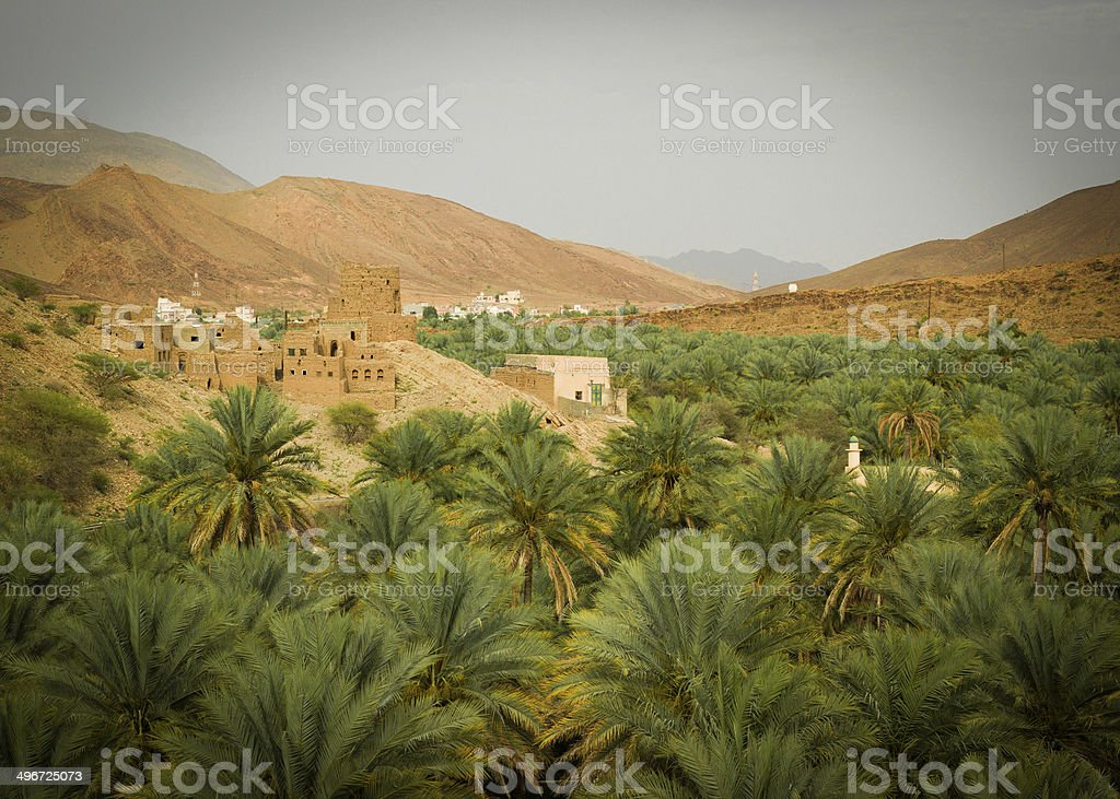 Palm tree oasis in Oman stock photo