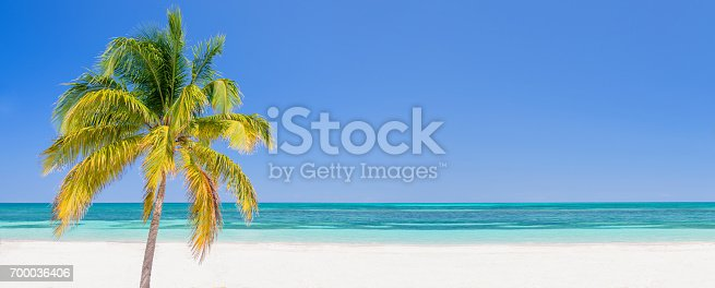 istock Palm tree on a beach in Cayo Levisa Cuba, panoramic background with copy space, travel concept 700036406