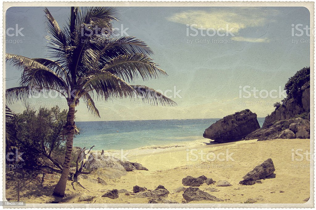 Palm Tree on a Mexican Beach - Vintage Postcard stock photo