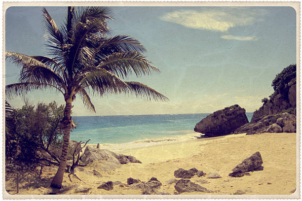 palmier sur une plage mexicaine, carte postale vintage - carte postale photos et images de collection