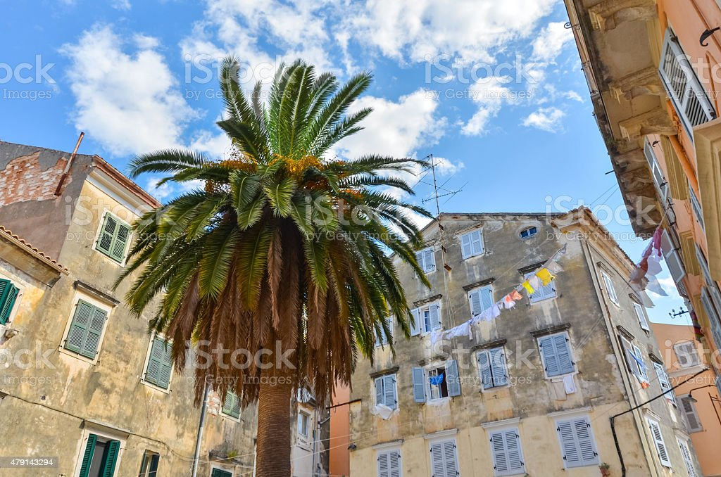 palm tree on a small square in corfu stock photo