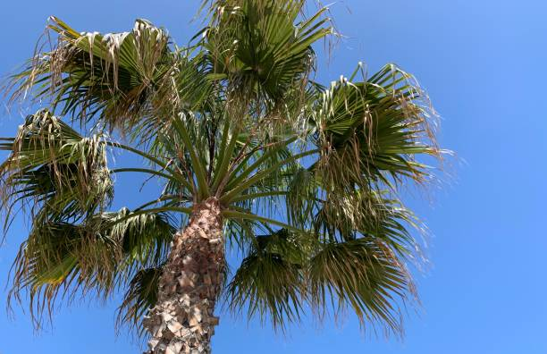 Palm tree on a sunny day stock photo