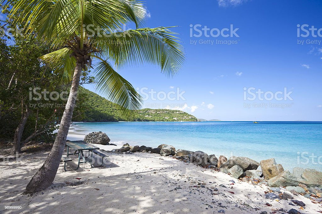 Palm tree on a tropical beach in US Virgin Islands stock photo
