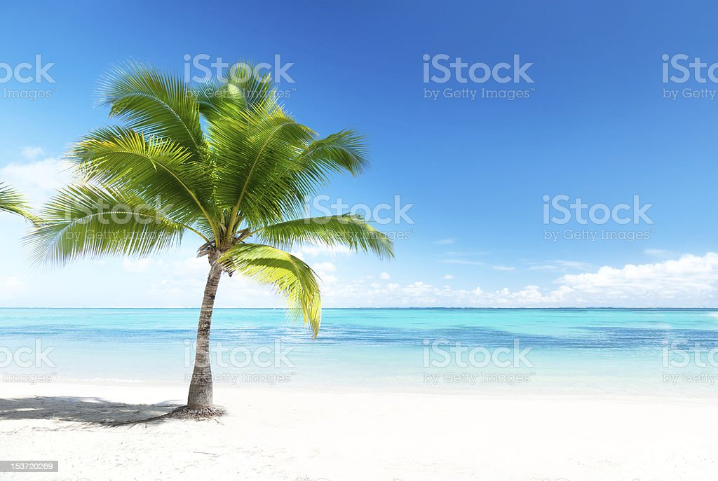 Palm tree on beach overlooking ocean stock photo