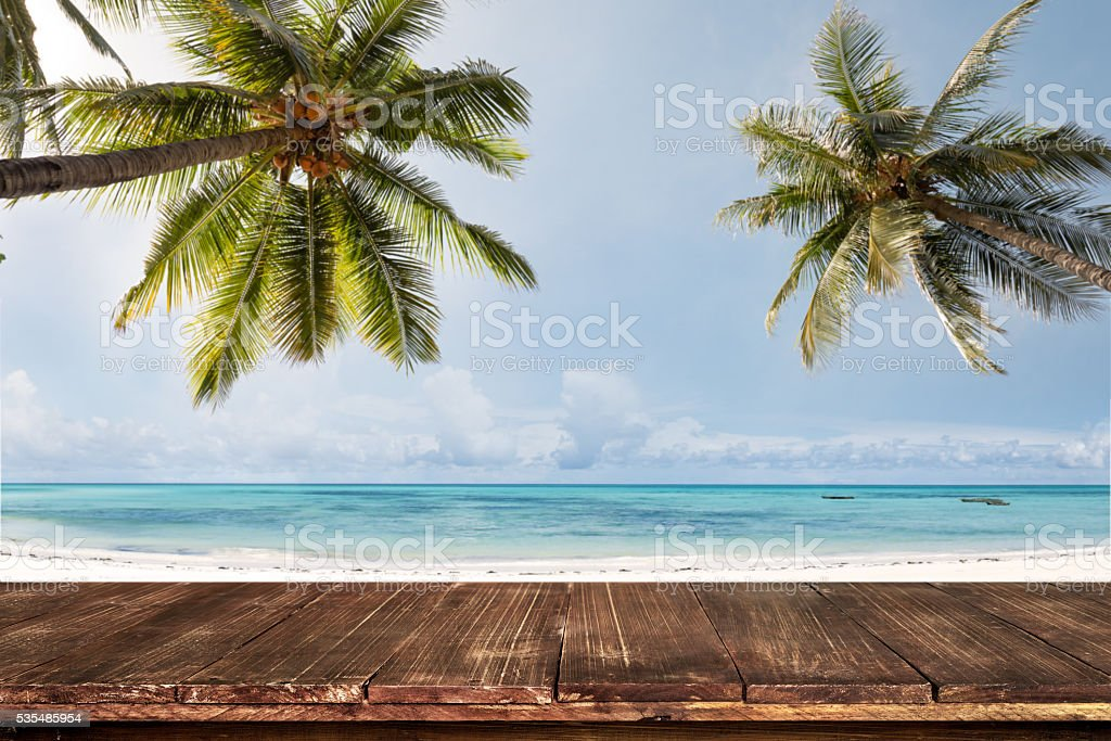 palm tree on beach stock photo