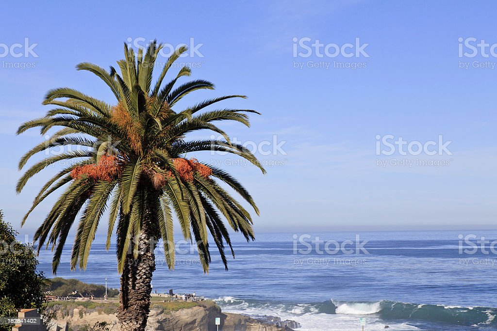 Palm Tree on California Coastline, La Jolla stock photo