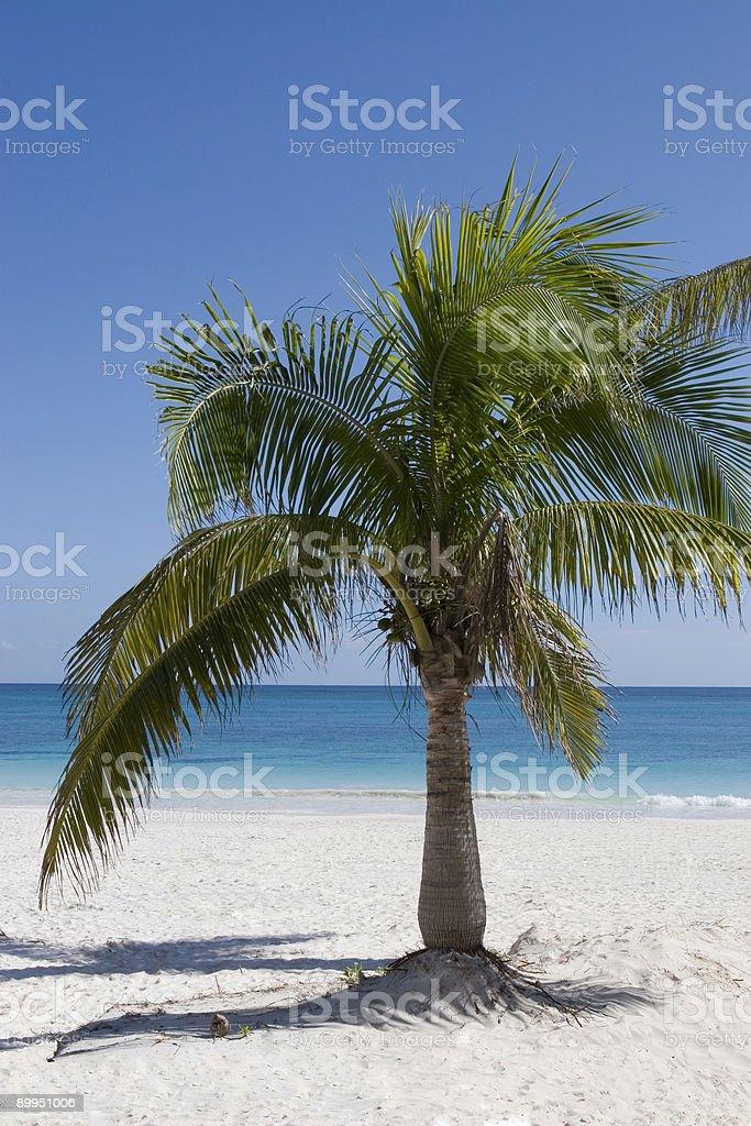 Palmen am karibischen Strand – Foto