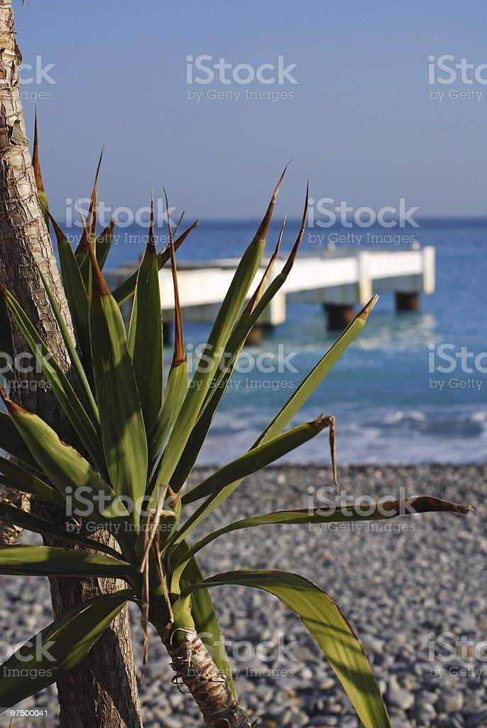 Palm tree on seashore royalty-free stock photo