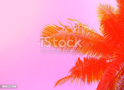 istock Palm tree on sky background. Palm leaf ornament. Pink and orange toned photo. 868422368